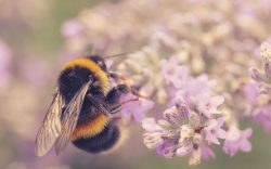 The Business of Bees – A Tale of Interconnectedness