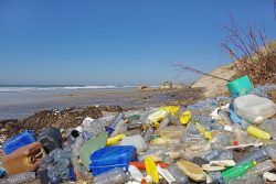 Is there a plastic crisis and what can be done about it?