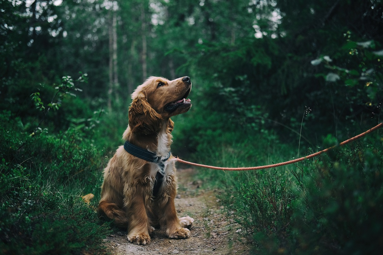Image of a dog in a forest looking up at its owner