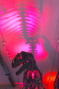 Photo of a dinosaur housed with the museum where the event took place